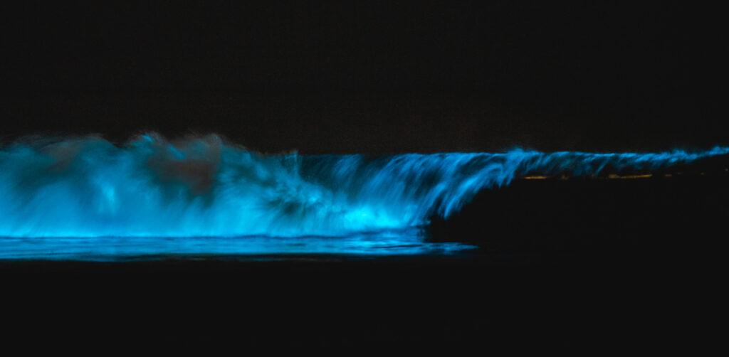 bioluminescent waves