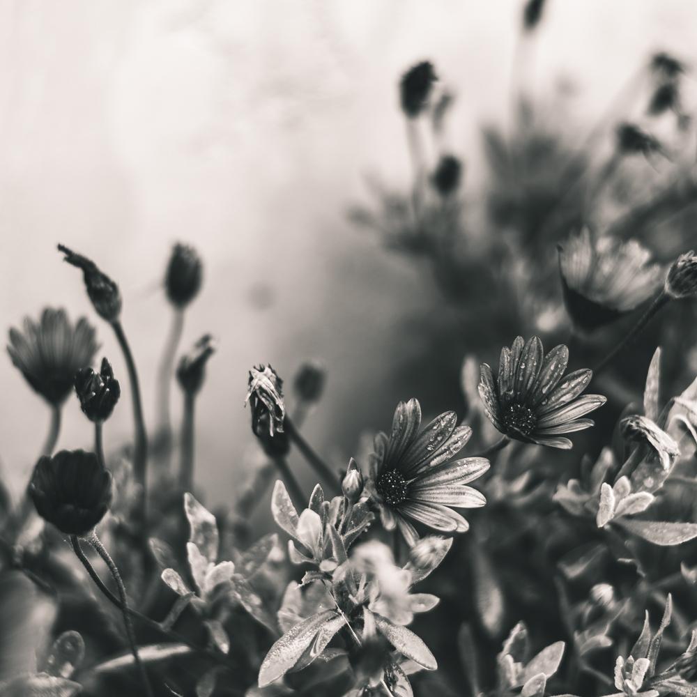 flowers in Encinitas