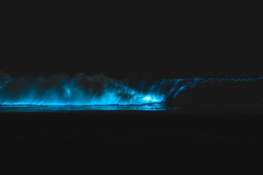 bioluminescent waves san diego